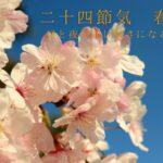 二十四節気春分桜