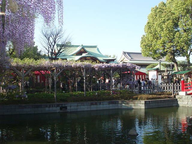 File:Kameido shrine wisteria festival2.JPG - Wikimedia Commons (44975)